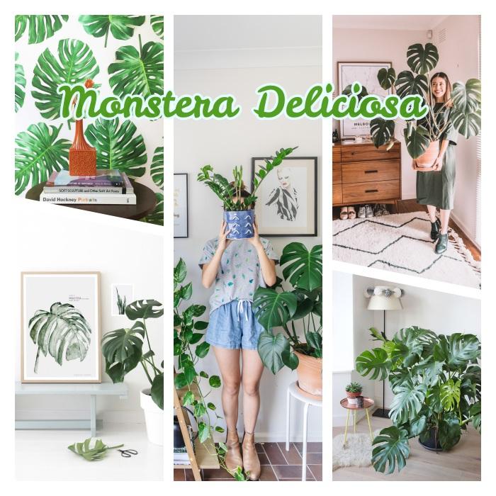 monstera deliciosa plante verte à larges feuilles à cultiver dans un pot de fleur, exemple de grande plante tropical pour une deco jungle urbaine
