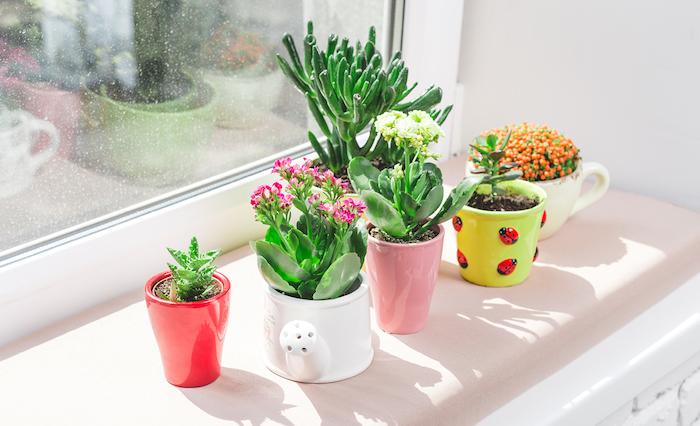 plusieurs plantes fleuries d intérieur cultivés en pots colorés au rebord de la fenêtre, deco salon zen romantique