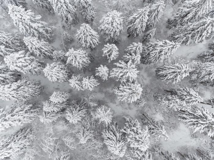 idée de fond ecran paysage incroyable, photo vue d'en haut au-dessus d'une forêt aux arbres conifères couverts de neige