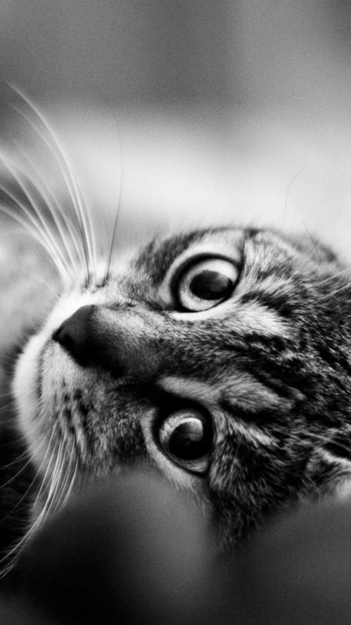 Changer son fond d écran ado fond ecran ordinateur stylee belle photo chaton mignon photographie noir et blanc