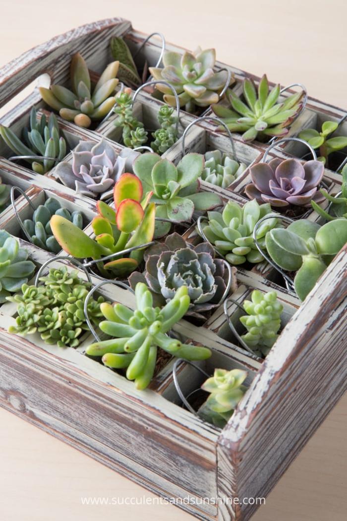 Le plus cool idée calendrier de l avent personnalisé calendrier de l avent pour couple avec des plantes succulentes