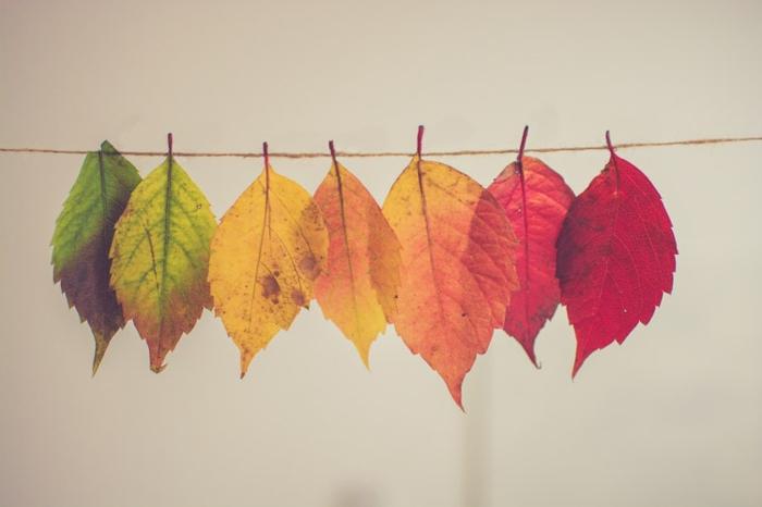 Magnifique fond d écran fleur, fond d écran stylé inspiration choix fond d ecran style automne, feuilles d arbre differentes couleurs