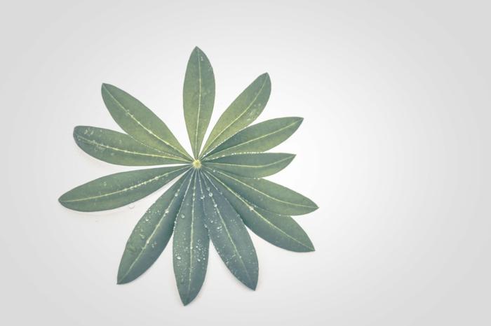 Fond d écran gratuit pour ordinateur, quel fond d ecran choisir pour mon telephone plante verte fond blanche