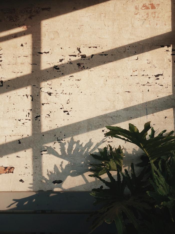 Dessin photo fond d écran zen, plante verte silhouette fond ecran ordinateur belle image à utiliser chouette idée