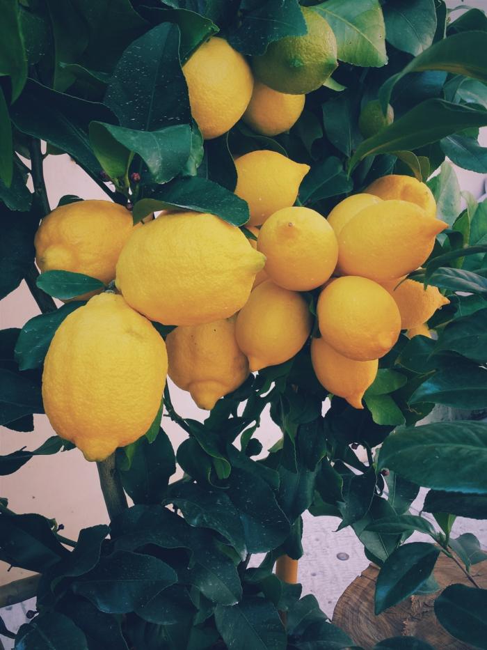 Choisir son fond ecran ordinateur, les plus beaux fonds d écran photo à choisir citron photo sur branche