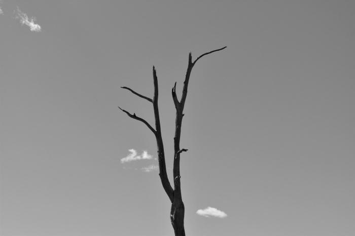 la silhouette d'un arbre dépouillé qui se détache sur le fond du ciel gris, photo noir et blanc artistique