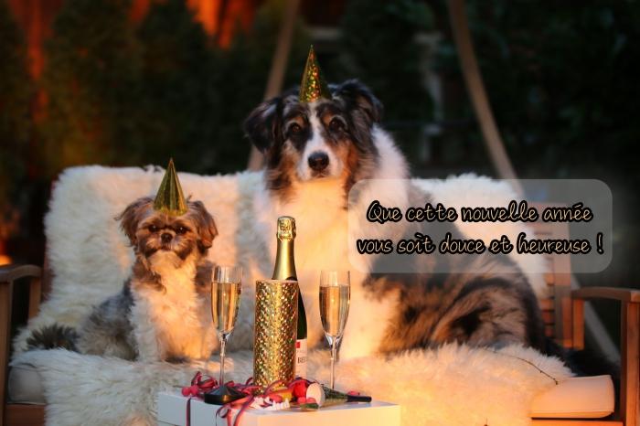 idée photo bonne année 2019, photographie animaux de compagnies et célébration nouvel an 2019 avec souhait