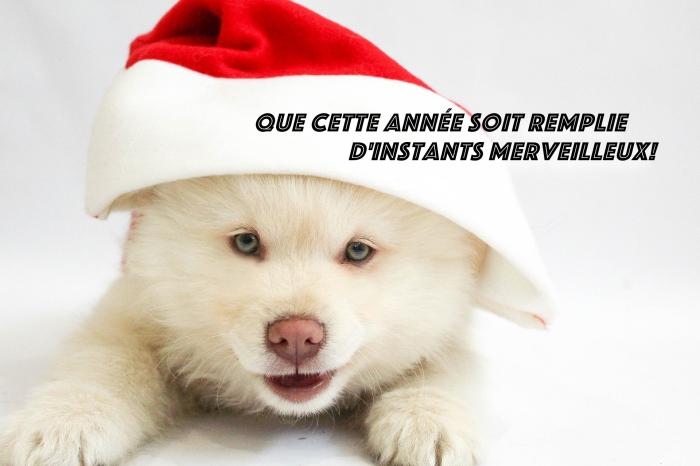 exemple de carte numérique avec bonne année 2019 humour, photo petit chien blanc avec chapeau de noel et message nouvel an