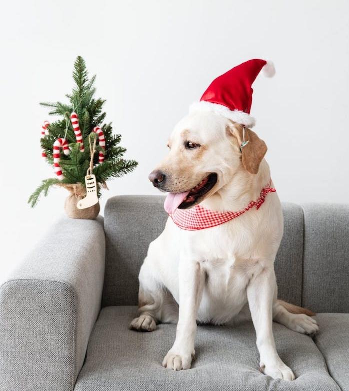 niche chien, cabane pour chien anti bruit, nouvelle invention anti stress chien pour réduire le bruit du feu d artifice lors du nouvel an, saint sylvestre