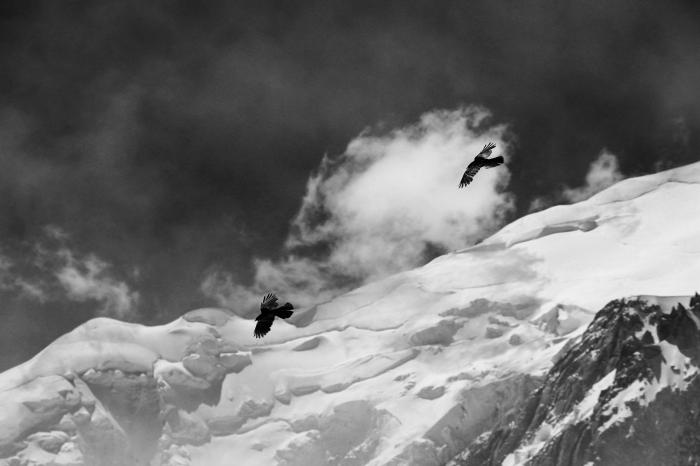 jolie photographie noir et blanc de deux oiseaux volant au-dessus de la montagne enneigée, sous le ciel gris