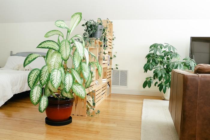 idee de brise vue interieur en cagettes de bois superposées surchargées de pots de plantes, lit gris et blanc, canapé cuir marron