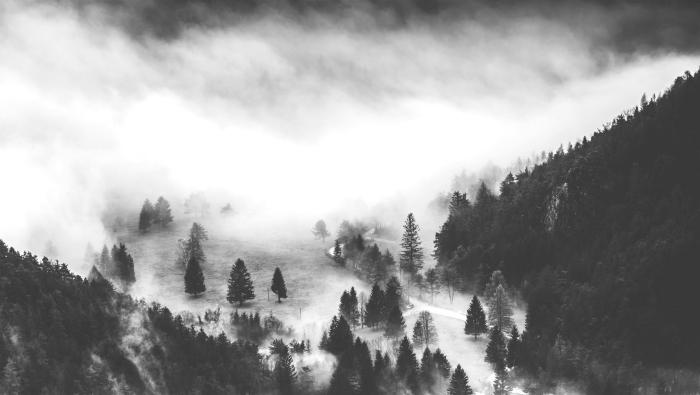 belle image noir et blanc de forêt de sapins dans la brume, exemple de joli paysage monochrome naturel