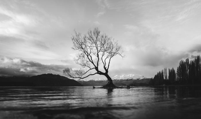 les plus belles images paysages gratuites en noir et blanc, un arbre solitaire s'élevant au milieu d'un lac et des sommets enneigés d'une montagne en arrière plan