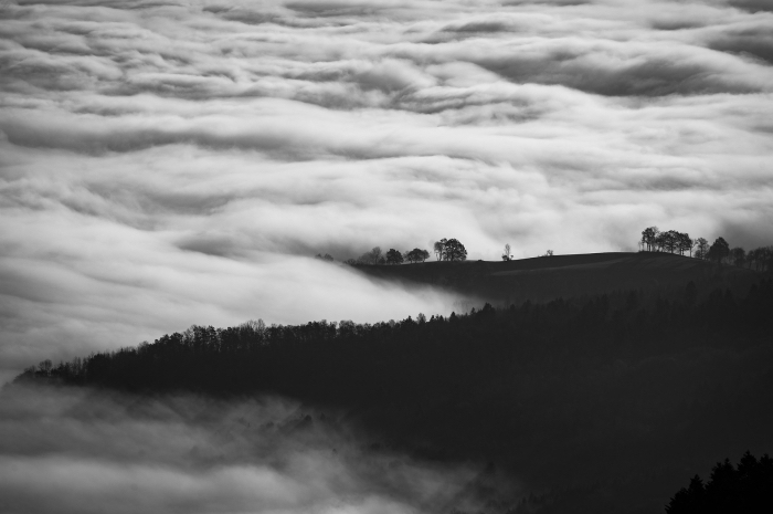 les plus belles images paysages de nature, joli cliché noir et blanc de nuages flottantes en dessus la forêt