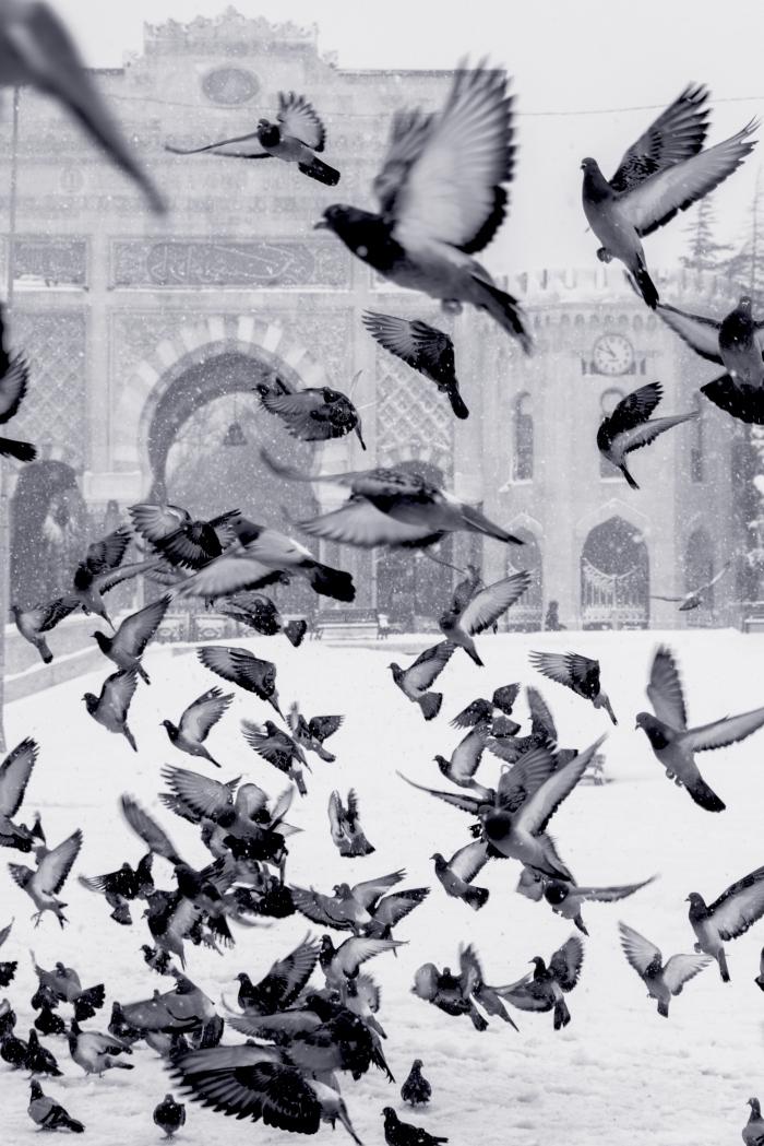 des pigeons sous la neige en train de s'envoler, photo en noir et blanc de place sous la neige, photographie de rue en noir et blanc