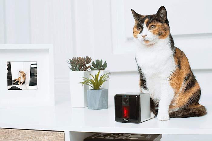 le meilleur compagnon du chat domestique, petcube bites 2 pour surveiller et nourrir son animal de comapagnie en notre absence