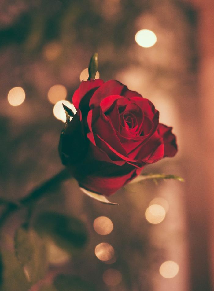 Offrir une rose rouge veut dire de l'amour romantique, belle image d'amour, image st valentin idée que offrir a son copain