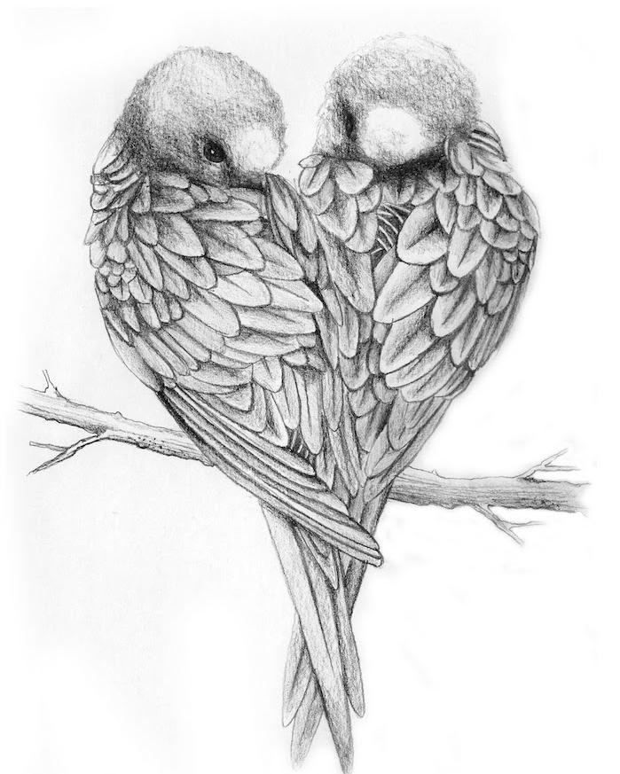 dessin d oiseaux en noir et blanc, dessin au crayon simple graphique de deux tourtereaux perchés sur une branche, dessin amoureux