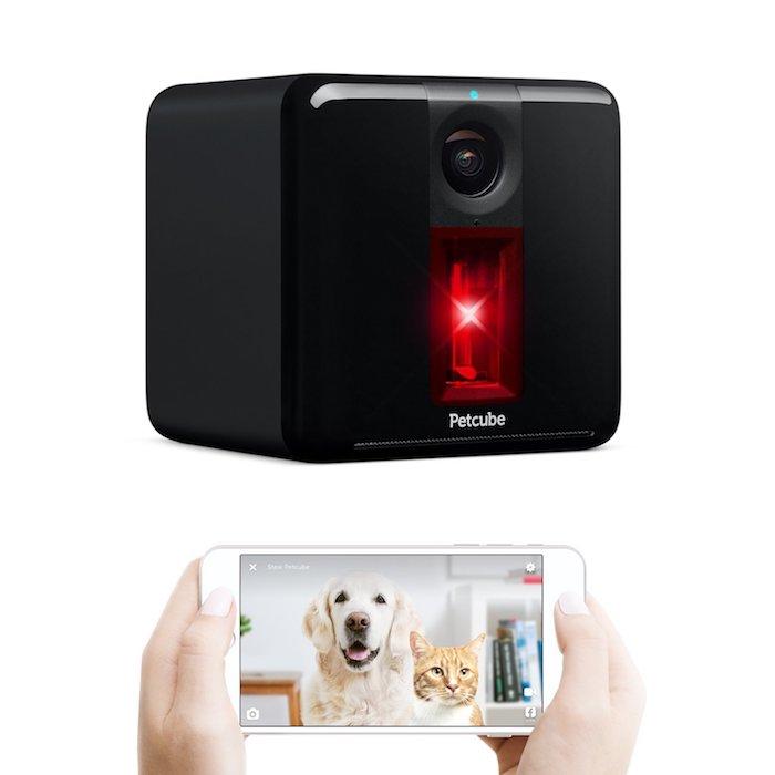 surveiller son animal de compagnie facilement avec les caméras intégrées dans petcube bites 2