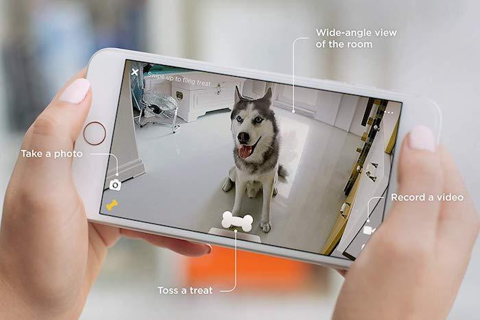 idée d assistant intelligent permettant à surveiller et nourrir son animal de compagnie lorsqu'on est absent de maison