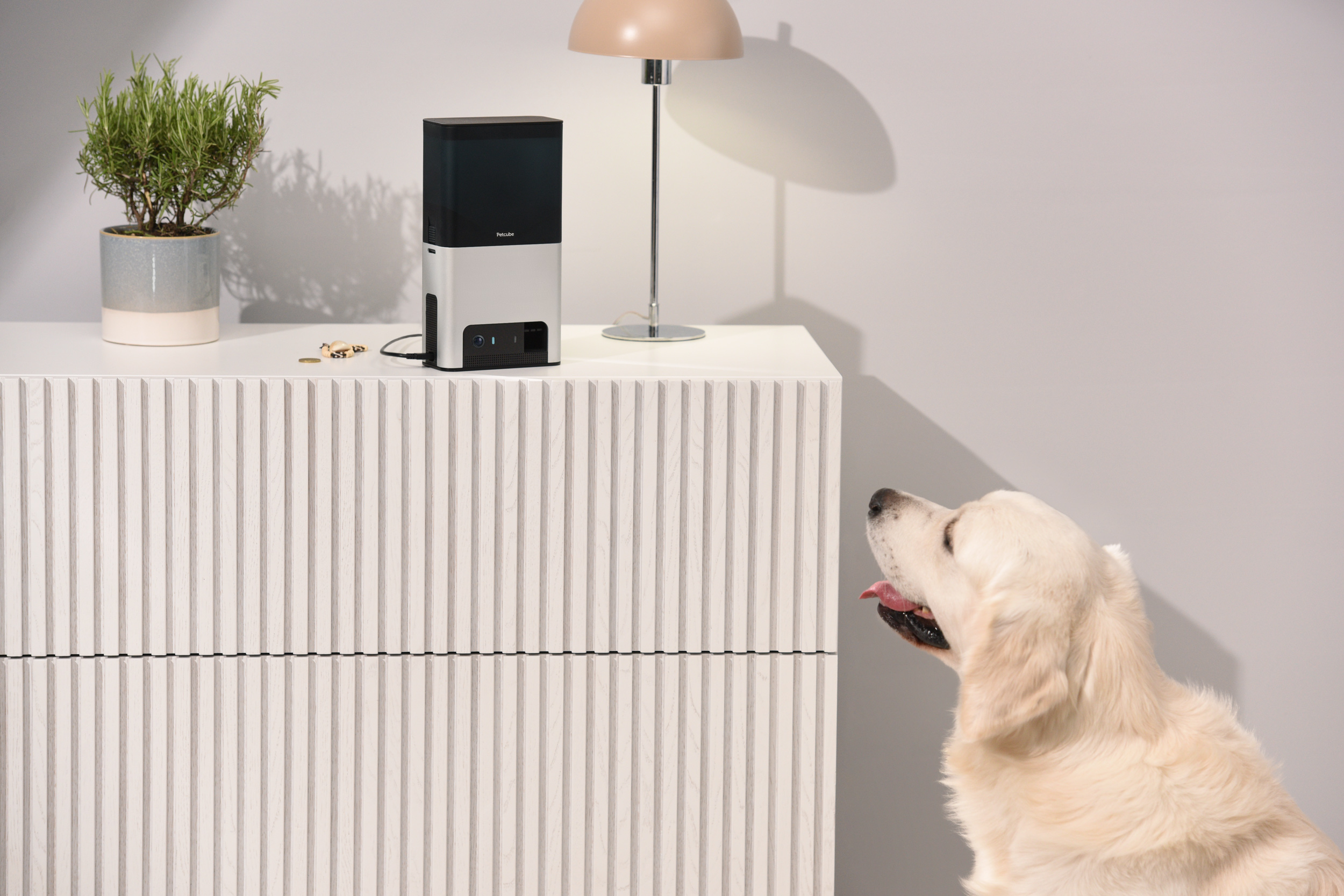 alexa fonctionne avec petcube 2 pour tenir compagnie, occuper et surveiller son chien lorsqu'on est en dehors