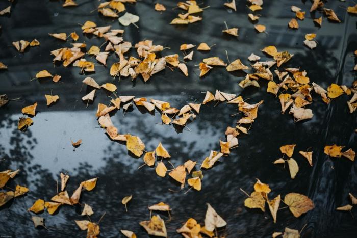 Les feuilles d'automne jaunes, image saint valentin, image romantique coeur st valentin époque de contacts sur les reseaux socialux, pluie nostagie