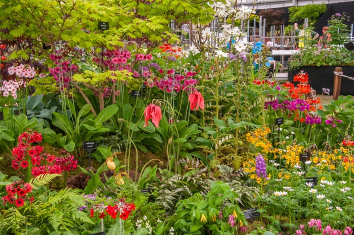 exemples massifs vivaces, jardin fleuri avec un emultitude d'espèces, parterre devant maison