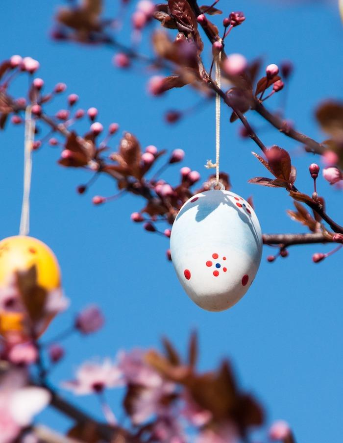 Oeuf sur branche fleurie, jolie image de pâques gratuit, joyeuse fete de paques avec une image a telecharger