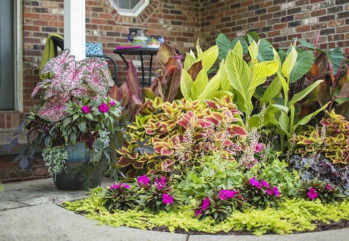 former un massif de plantes pour le printemps-été, jolies fleurs ornementales devant la maison