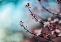 Paysage de printemps – la beauté de la nature réveillée