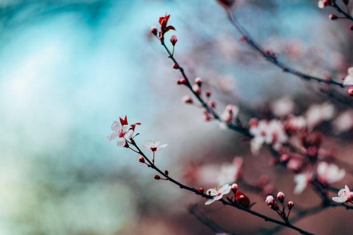 Image printemps arbre, paysage de printemps, photographie professionnelle, branche fleurie à fond flou bleu et vert