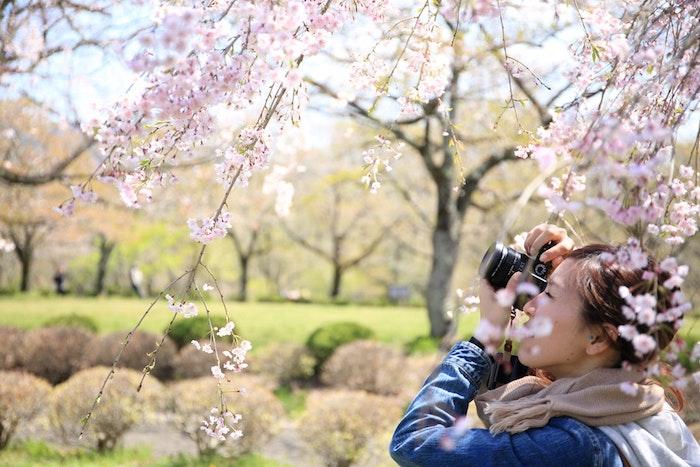 Fond d'écran printemps, femme qui prends photo de paysage de printemps, image jolie fleurie dans un parc au Japon, les fleurs de cerisier japonais
