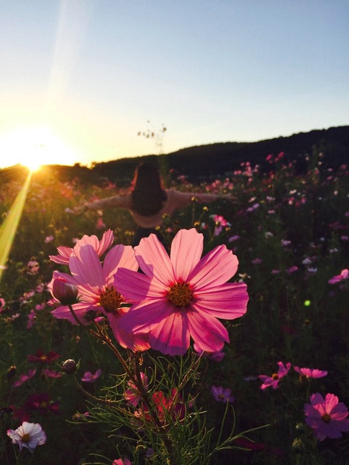 Fond ecran printemps, paysage de printemps, fleurie naissance, coucher de soleil, femme qui se promène dans un champ fleuri