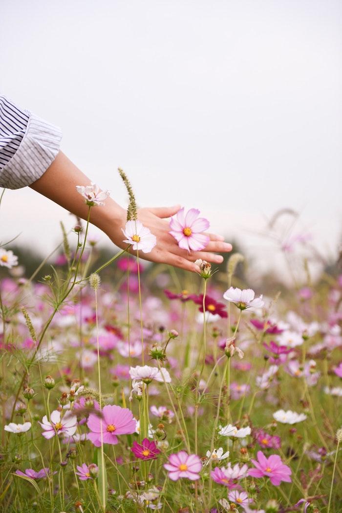 Sentir le printemps, main qui touche les fleurs, sentir l'odeur, saisir le moment, champ fleuri au printemps, image de beauté, chemise rayé et main de femme
