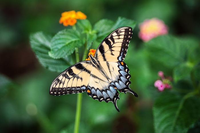 Chouette idée pour fond ecran nature papillon et fleurs, paysage de printemps vert, croissance des végétaux, marco photographie