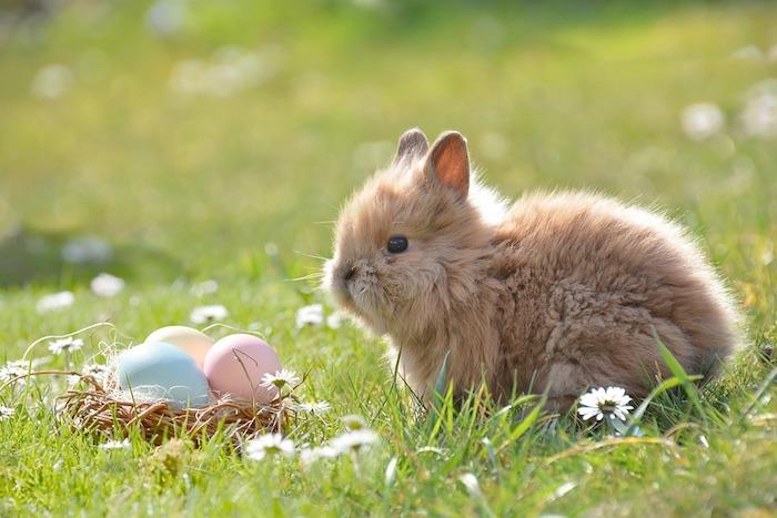 Beau paysage avec adorable lapin de Paques, fantastique fond d'ecran nature au printemps, image printemps floraison