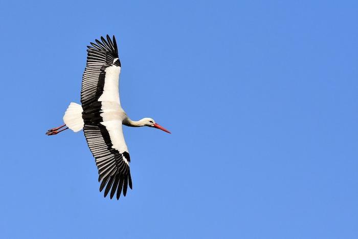 Ciel bleu avec cigogne qui vole, belle image paysage de printemps, fond d'écran printemps, jolis paysages printemps