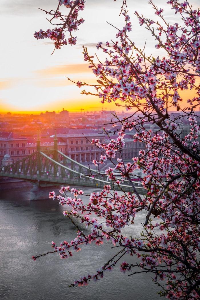 Arbre fleurie pour fond d'écran paysage printemps, fond ecran fleur en haut de la ville de Budapest, idée de paysage pour fond d'écran, le pont vert à Budapest