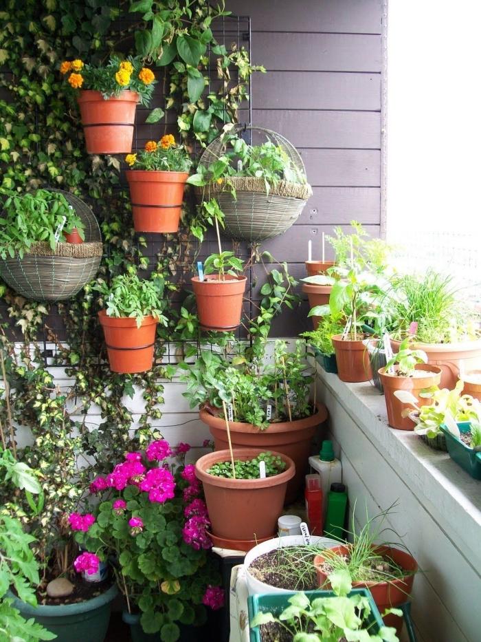 un treillis mural avec grimpantes et pots de fleurs et d'herbes aromatiques, idéal pour aménager un petit jardin ou potager sur balcon