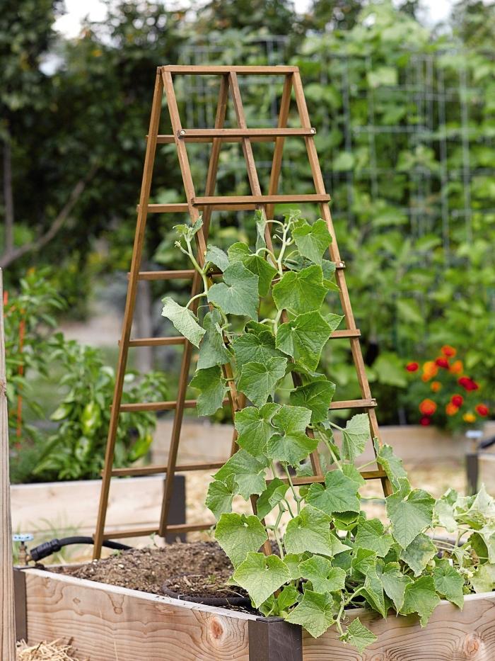 un treillis en bois pour faire grimper le concombre, un carré potager vertical et en bois dans un petit jardin
