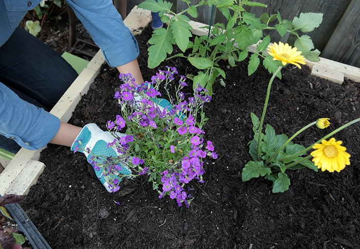 parterres de fleurs avec fleurs de printemps et d'été, planter des fleurs ornementales en petit massif
