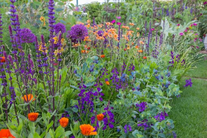 fleurs lilas et oranges, pelouse verte, combinaison de fleurs de taille différente, massif jardin miraculeux
