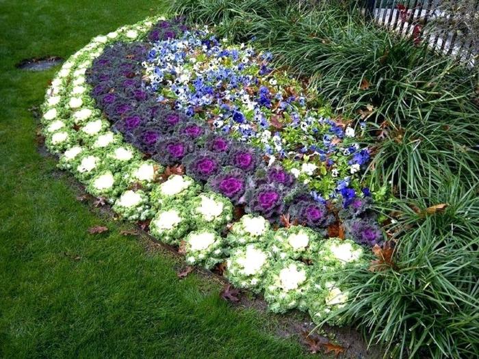 parterre de fleurs en blanc en lilas et bleu, massif fleurs forme arrondie, herbe verte, touffes de feuilles