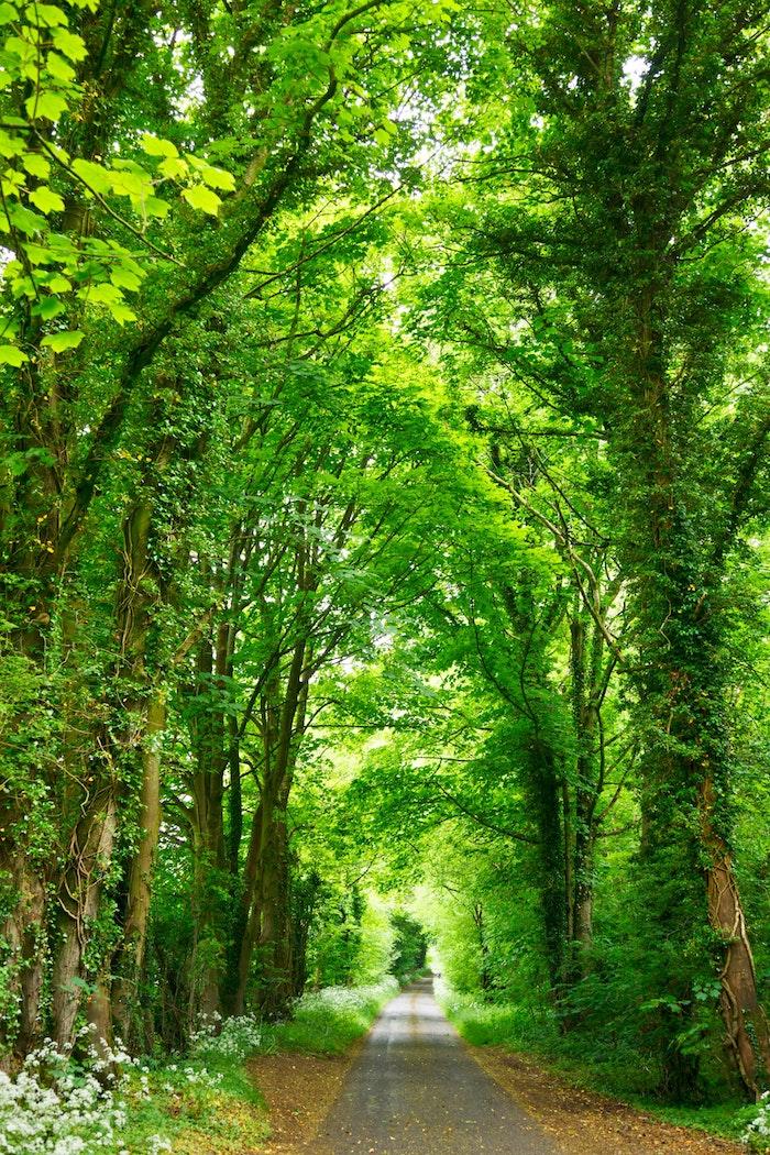 Route dans la foret vert, fond ecran fleur, paysage fantastique fond d'ecran, chemin de foret arbres verts