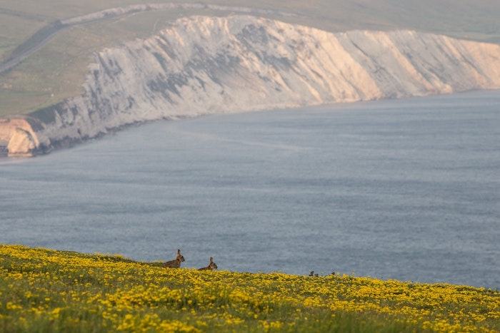 Ile nature magnifique, océan et champs fleuris avec lapins qui se promenent, image pour fond d'écran gratuit printemps, image printemps, fleurs s'épanouissent