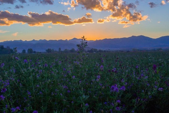 Coucher de soleil dans la nature, montagne au bout, chouette photo pour fond ecran paysage, image printemps, la beauté de la nature