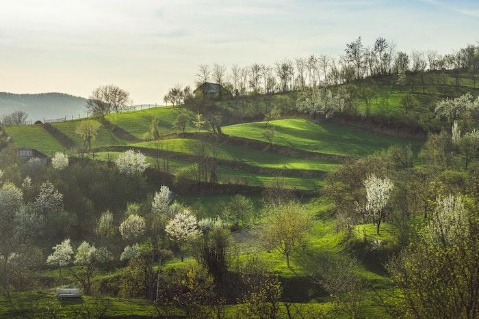Photo paysage champs avec arbres fleuries, fond d'écran image printemps de beauté, fond d'écran printemps fleurie