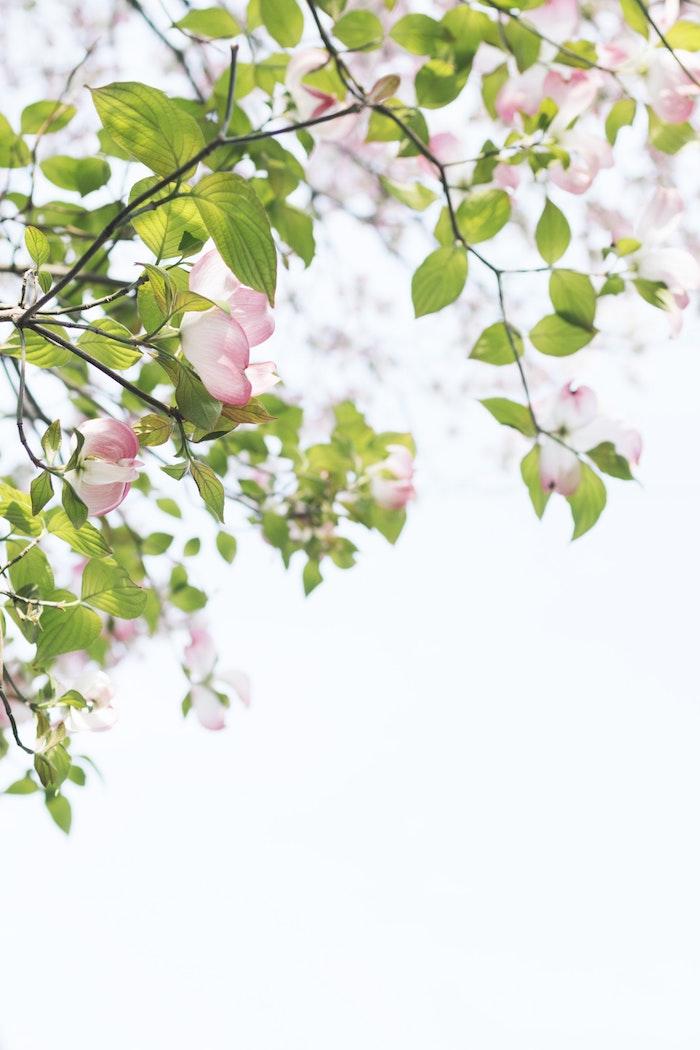 Branche fleurie, image printemps fond d'écran printemps, image printemps paysage, arbre fruitier fleuri