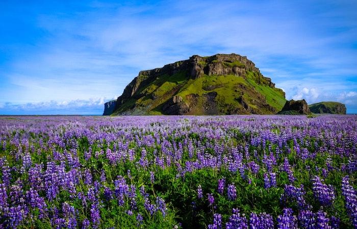 Ile avec champ de fleurs et un colline vert, beau fond ecran printemps, fond ecran fleur, belle image arriere plan