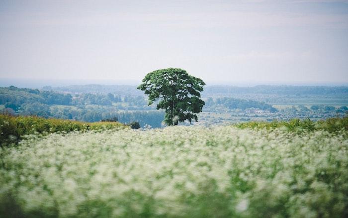 Arbre et champs de fleurs printaniers, photo printemps, fond d'écran printemps, paysages de campagne au printemps